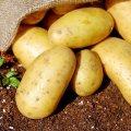 100 грамм картошки: пищевая ценность, калорийность, полезные свойства и способы приготовления