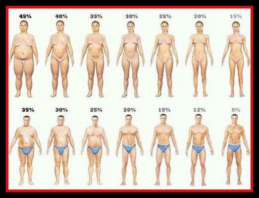 Процентное содержание жира