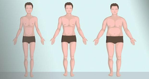 Основные виды телосложения