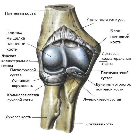 Внутренняя поверхность суставной капсулы