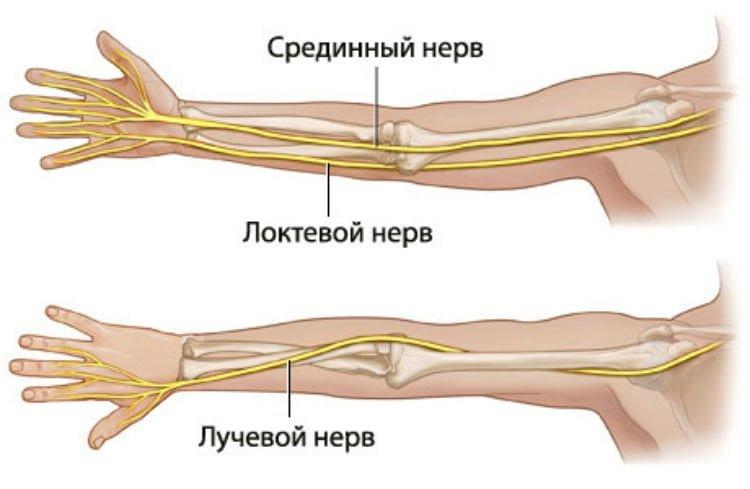 Нервы руки
