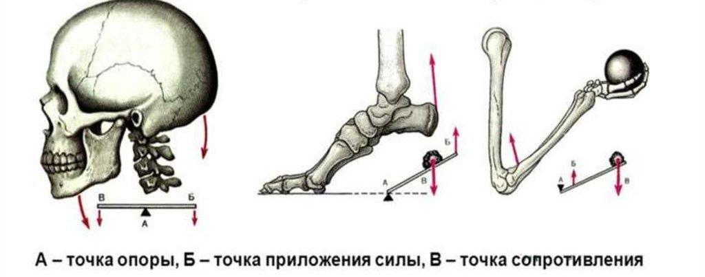 Простые рычаги тела