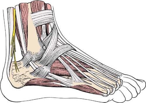 Кости голеностопа