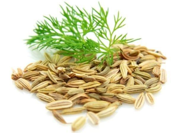 семена укропа лечебные свойства и применение отзывы