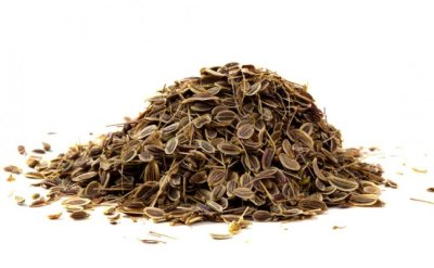 Что лечат семена укропа: лечебные свойства, противопоказания, как применять, отзывы