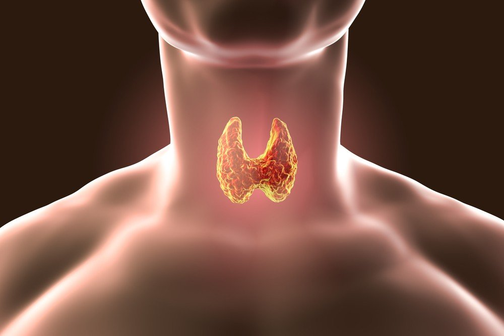 Тиролиберин влияет на щитовидную железу